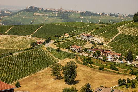 Reisen - Trüffelreisen in die Trüffelregionen wie Piemont, Toscana, Istrien und Perigord