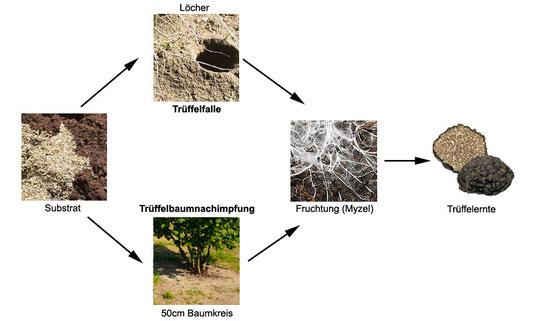Hier gibt es Trüffelsubstrat Rezepte für ihre Trüffelbaumnachimpfung und für Trüffelfallen