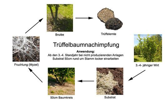 """Bei der Trüffelbaumnachimpfung """" Réensemencement """" werden die Trüffelsporen auf den vorbereiteten Boden im Umkreis von ca. 50 cm rund um den Stamm des Trüffelbaumes ausgebracht"""