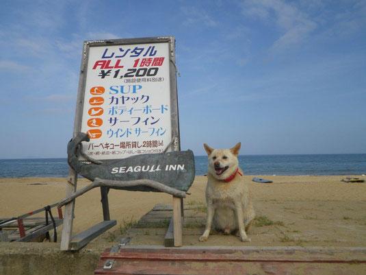 福岡 ウインドサーフィン レンタル