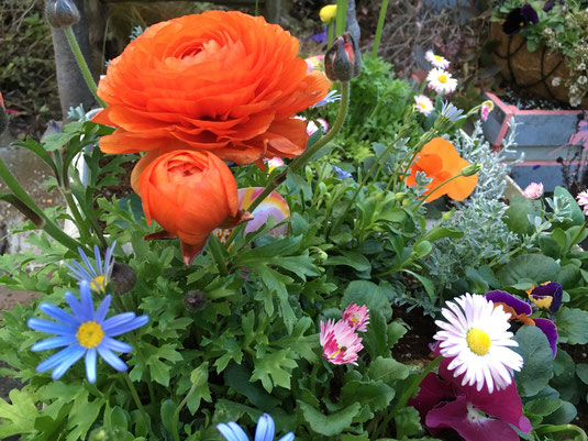 花壇づくり ガーデニング