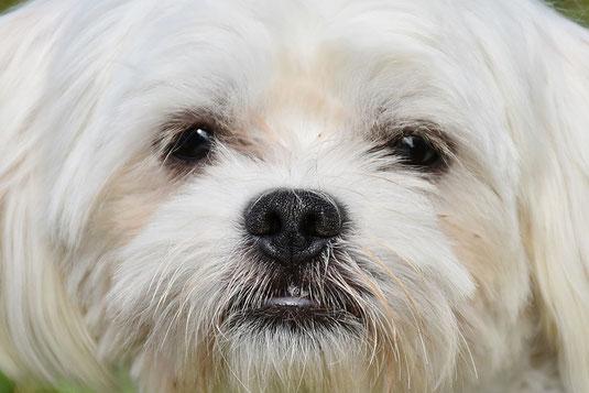 Hundegeschichten Kikkie