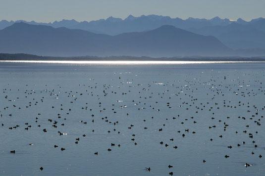 Wasservögel vor Bergkulisse (Foto: H.Guckelsberger)