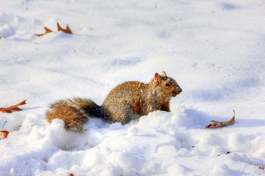Eichhörnchen (Foto: Pixabay)