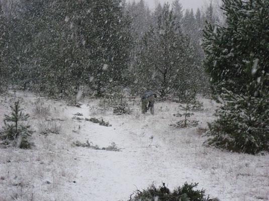 Arbeitseinsatz beim Schneetreiben