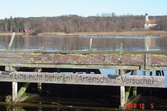 Flussseeschwalbenfloß in St.Heinrich (Foto: Horst Guckelsberger)