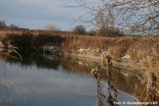 Wasserstand der Amper weit unter der Mooroberfläche (Januar 2008)