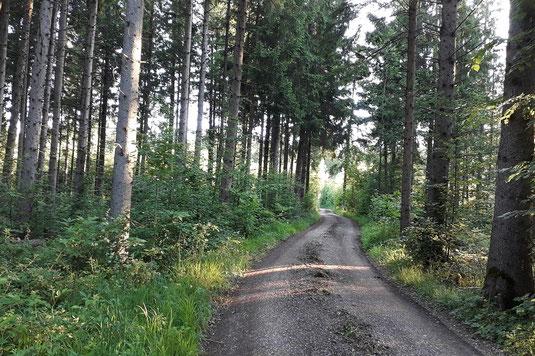 Unterbrunner Holz (Foto: Antje Geigenberger)