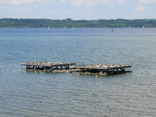 Flussseeschwalbenfloß in der Bucht von St.Heinrich (Foto: Andrea Gehrold)