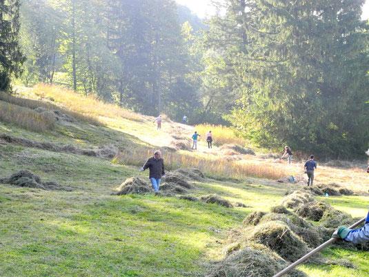 "Mäharbeiten am Kalkflachmoor ""Lange Wiese"