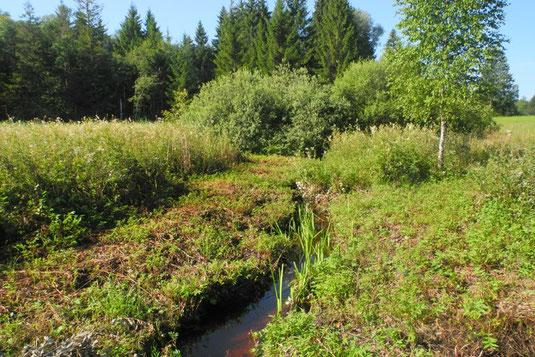 """""""Diagonalgraben"""" Süd nach Mahd und Abheuen (Foto: Horst Guckelsberger)"""