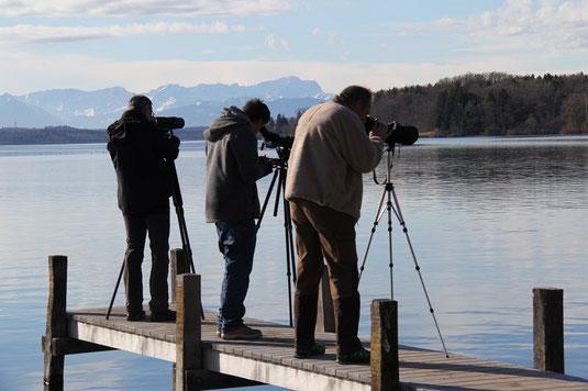 Wasservogelzählung an der Roseninsel (Foto: Pit Brützel)