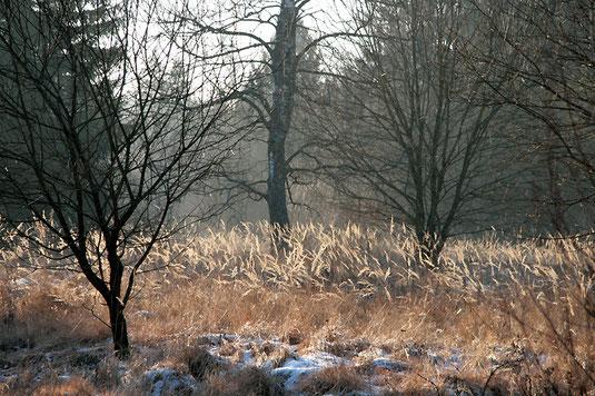 Flächen mit Landreitgras wirken malerisch, sind aber sehr artenarm. Sie sind nunmehr gemäht. (Foto: Horst Guckelsberger)