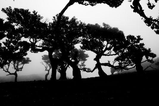 Der Feenwald von Fanal