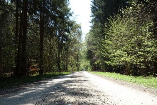 Radtour, Radltour, München, Fahrrad, Tagestour, Wald, ins Grüne