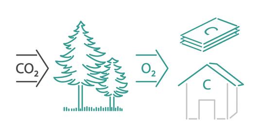 Die Grafik verdeutlicht, wie der Baustoff Holz CO2 bindet.