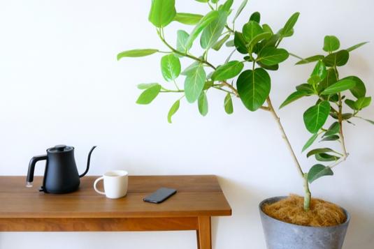 オフィスの休憩スペース。観葉植物の鉢植え。テーブルに置かれた水差し。白のマグカップとスマートフォン。