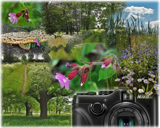 Wieder mit der Nikon Coolpix P7100 unterwegs