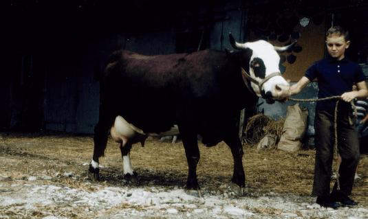 Cigale en 1964