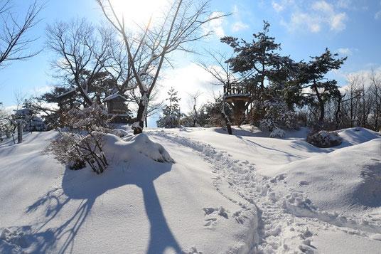 山頂のようす。展望台から木々越しに敦賀湾がキラキラとひかっていたが写真にはならず。