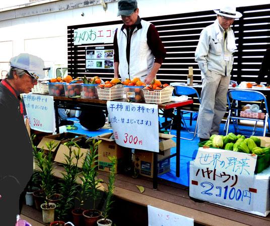 ハヤトウリ・カキ(干し柿用)・珍しい12月に咲くユリなど・・