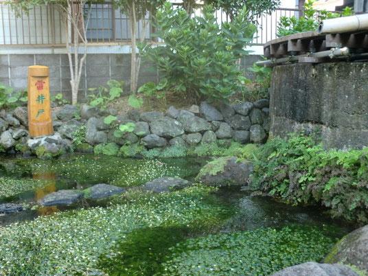 100年以上たった今でも、きれいな水がこんこんと湧き出ています。ミシマバイカモがたくさん生えているのが、きれいな水の証拠です。