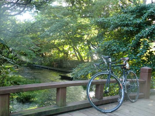 源兵衛川始点にかかる橋の上で。