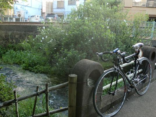しかし、清流バックだと自転車が映えるなぁ(自転車バカ
