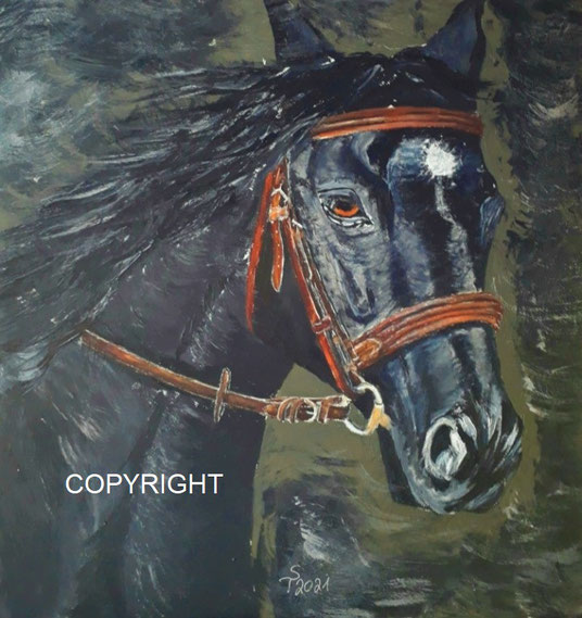 Pferdeporträt, Pferd schwarz