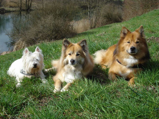unsere Hunde geniessen den Frühling