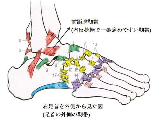 足首外側の靭帯