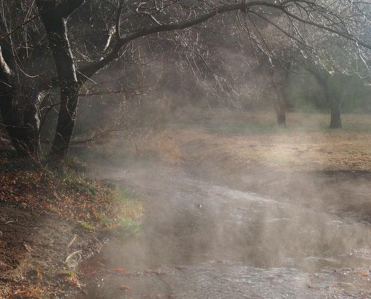 12月22日(2014) 冬の朝、湧き水の流れる場所で(野川公園・湧き水広場)