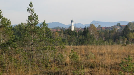 Königsdorfer Weidfilz, Foto: Birgit Weis