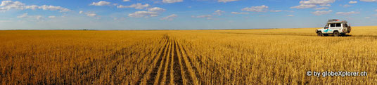 in Kasachstan, weit und breit nur Weizenfelder!!