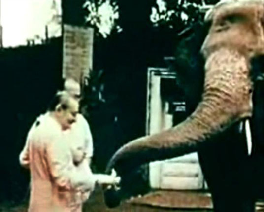 Baba feeding his favourite elephant