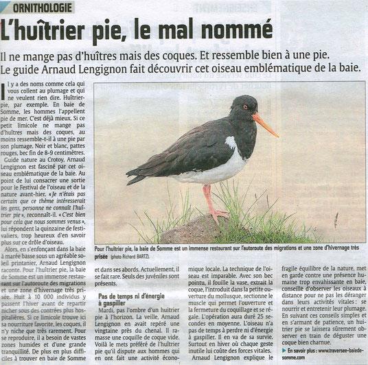 Sortie Huîtrier pie / Courrier Picard / Avril 2014