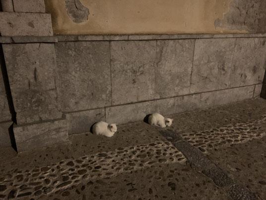 Italien, Sizilien, Sehenswürdigkeit, Cafalú, Katze