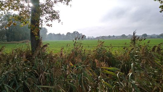 Blick auf die Felder auf dem Weg nach Königs-Wusterhausen