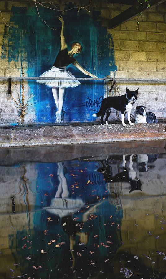 Zwei Border Collies vor einem Kunstwerk des normannischen Künstlers Näutil