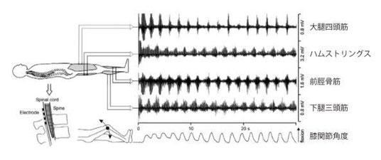 下肢の筋電図