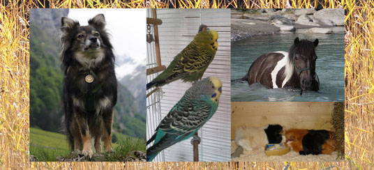 Mila, Tierkinesiolgie, Tierkommunikation