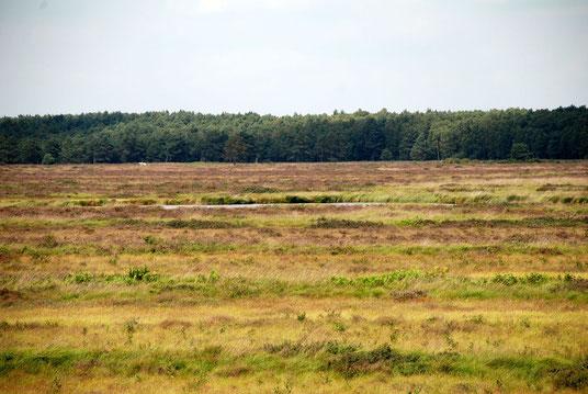 Muswillensee im Bissendorfer Moor (c) ukko.de CC BY 3.0