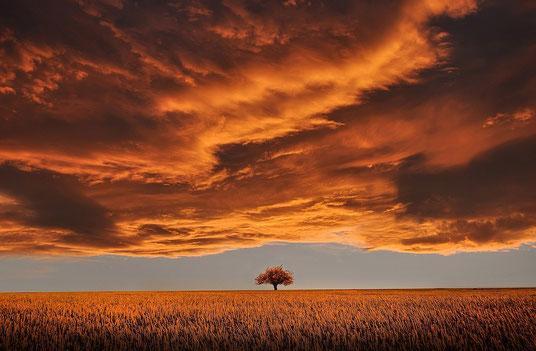 Ebene mit Baum und Wolkenhimmel in Rottönen