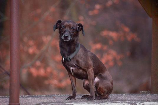 Hundefotografie outdoor an wunderschönen Plätzen auf dieser Erde.