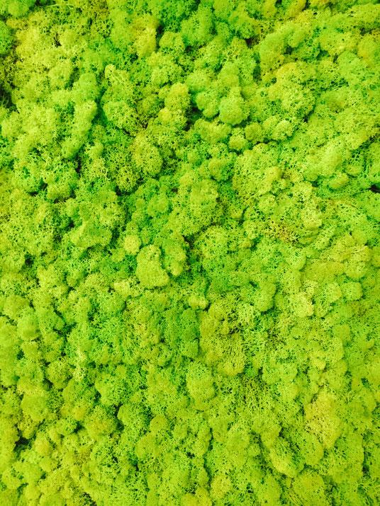 mur vegetal lichen vegetal indoor mur v g tal stabilis. Black Bedroom Furniture Sets. Home Design Ideas