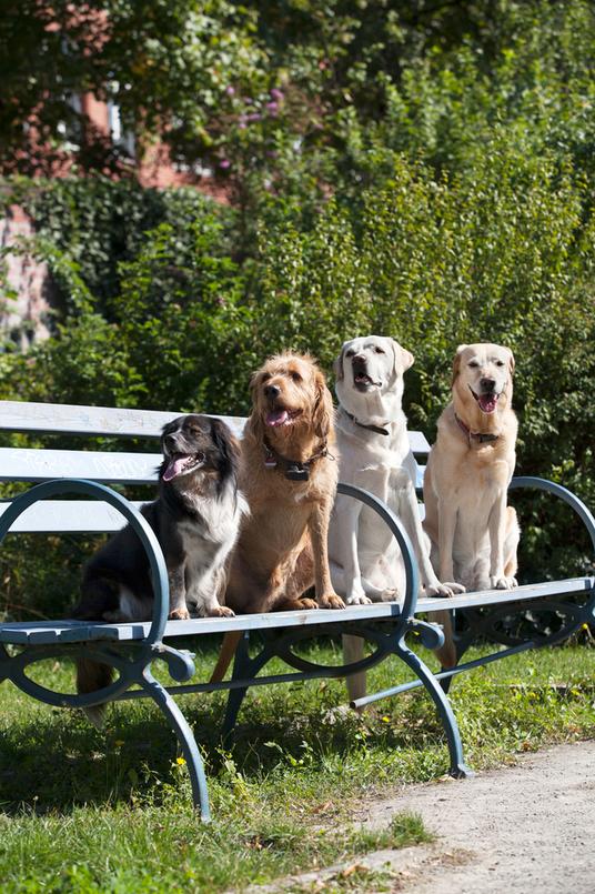 Melanie Knies, fotografie anke peters, berlin mit hund, Hundeschule, Krimispaziergang, Hundewanderungen, Sightseeingtouren mit Hund