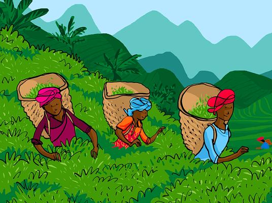 Teepflücker in Afrika und Mittelamerika