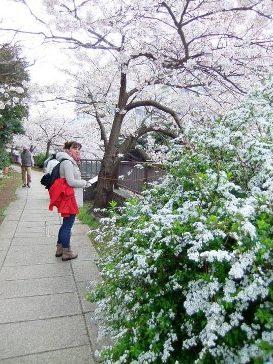 Itō - Sakura - rivière Matsukawa