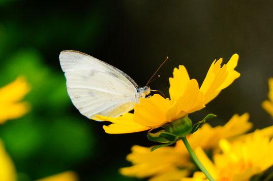 美しい自然の写真を撮っている時間は私にとって至福の時間です。