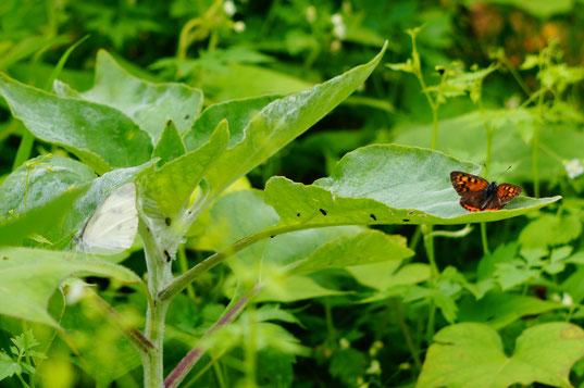 右の葉っぱの上にはオレンジ色のお友達がいました。